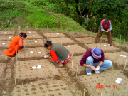 Sowing the rice garden in Nepal